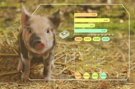 让猪住宾馆,看人工智能如何改变养殖业