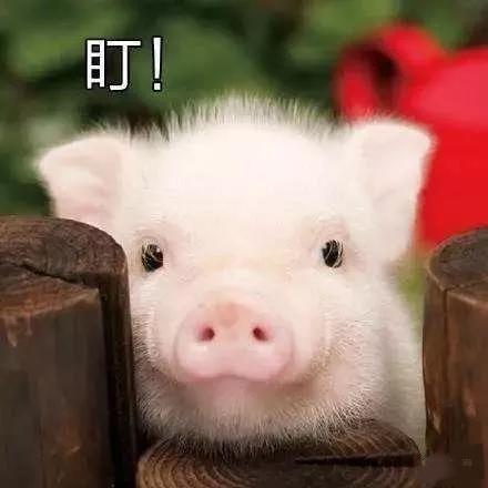一直缺猪却未见猪价大涨,为啥近日猪价一直是涨涨停停?