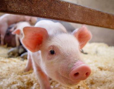猪料产量大减,猪饲料行业大裁员即将来临!