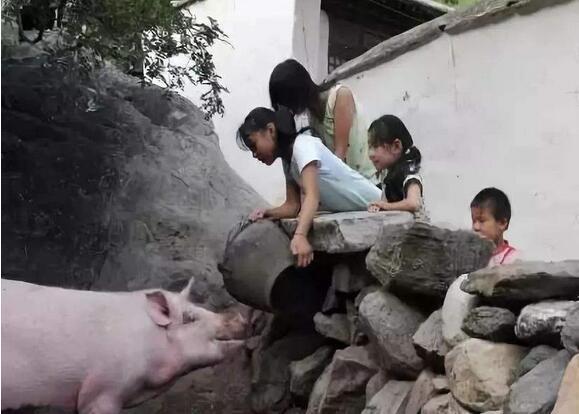 农村养猪多大规模合适?家庭农场是未来趋势