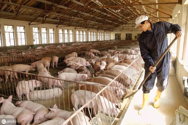 不是最先进的,却是最适合的!成本小功能大的养猪场设计