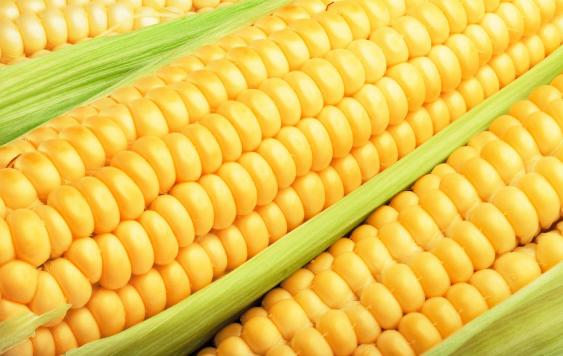 2019年05月11日全国各省玉米价格及行情走势报价表