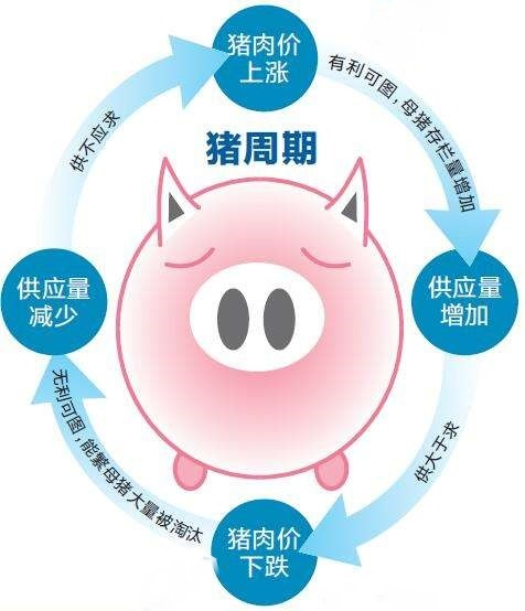 """猪周期提前启动,猪价上涨能否如""""猪坚强""""般长久?"""