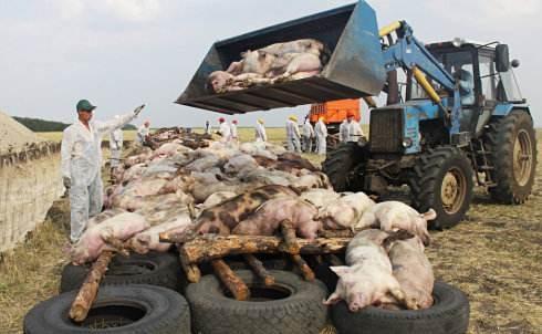 巴西如何防控非洲猪瘟?巴西根除非洲猪瘟的经验学习