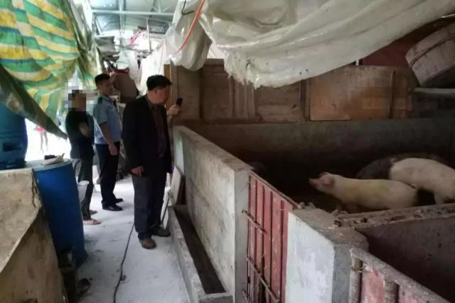 井研一村民用泔水养猪被处罚,剩余泔水进行了无害化处理
