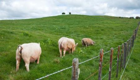 5月14日全国生猪价格:甘肃猪价较上周涨2.14元/公斤