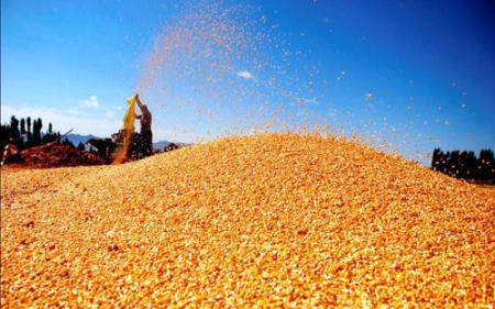 玉米逞强上涨关内再破一元大关 继续强势运行