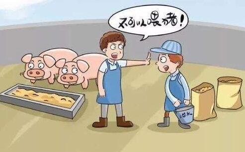 海南洋浦禁止餐厨垃圾喂养生猪 违反规定者最高罚10万元