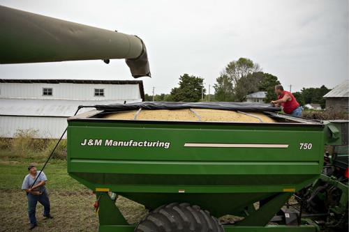 非洲猪瘟重创美国大豆出口,专家建议美国农民大量减产