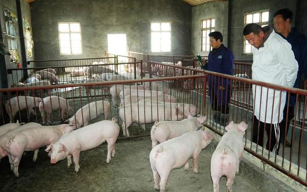猪场如何管理成本?管理好固定成本和可变成本猪场利益最大化