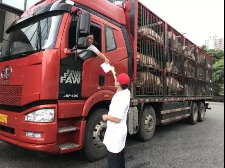 盘州拦截一起非法调运生猪案 83头生猪被无害化处理