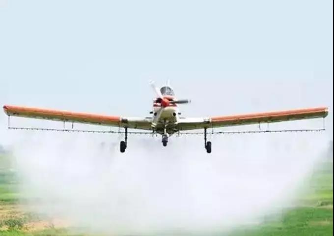 别传了!非洲猪瘟发虫进化成飞蛾,南宁要进行飞机撒药系谣言