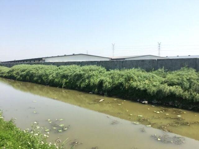 宝应县徐甸村东侧养猪场臭味扰民 居民正常生活被打乱