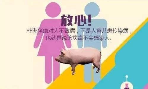 非洲猪瘟人吃了会怎样 一张图带你扫清非洲猪瘟疑惑!