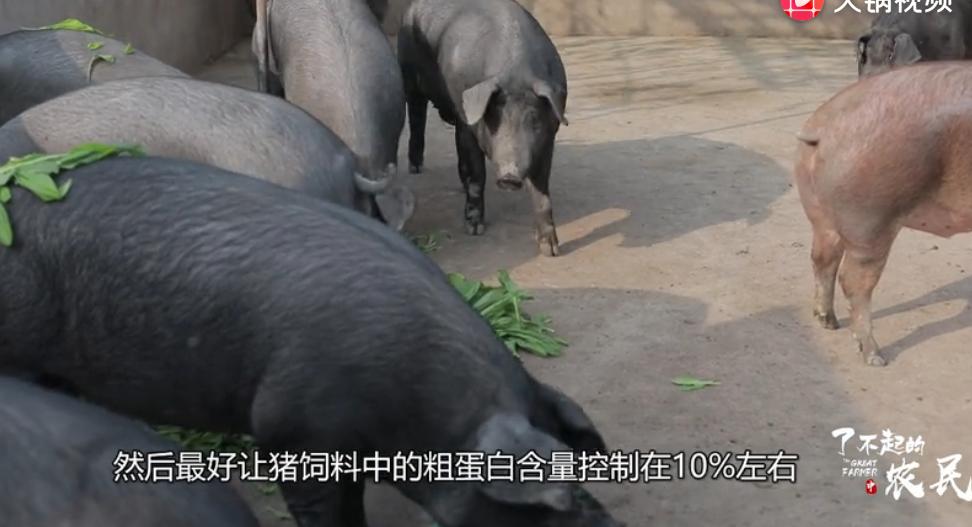 猪圈还有不臭的?看来这么多年的猪白养了,这样除臭猪都健康不少