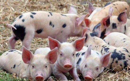 5月16日全国生猪价格局部地区涨跌互现,未来猪价可期!