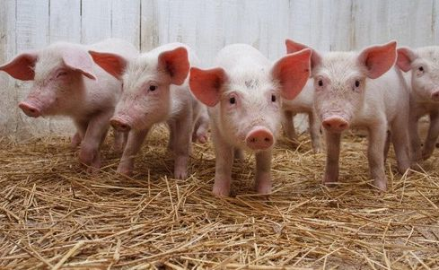 汕尾涉黑组织强占生猪市场敛财 涉案资产逾千万