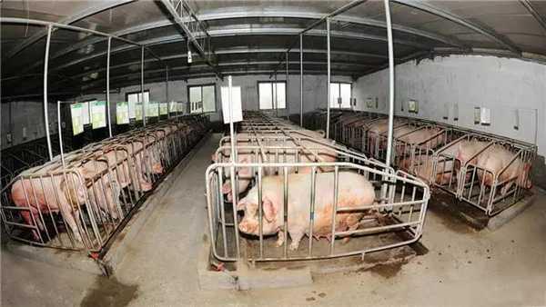 习水生猪产业新趋势新变化:规模化、生态化