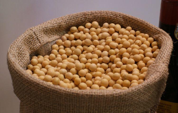 贸易纷争提振大豆价格 种植面积增幅显著需求疲弱长期延续