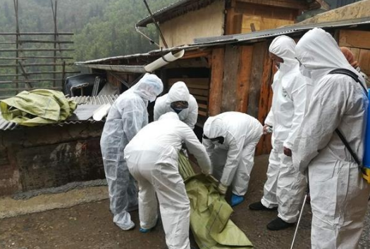 若尔盖已无害化处理429头生猪 目前暂无新增非洲猪瘟病例