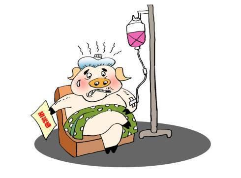 猪流感or猪感冒 教你临床的鉴别方法与防治措施