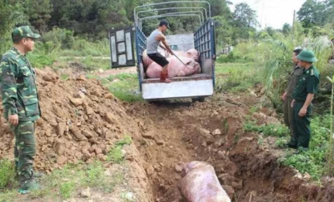 广西金秀县农业局:共同抵制乱丢弃病死猪违法行为!