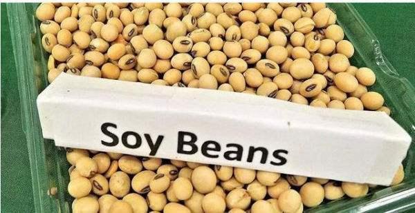 豆粕涨势尚未结束 短期或有调整可能