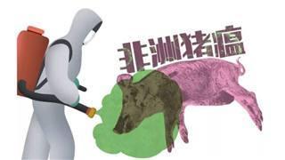 浅析非洲猪瘟临床症状 注重基层防控举措