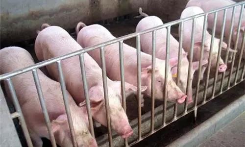 4月产能去化持续,即将走出消费低迷期,猪价上涨成必然