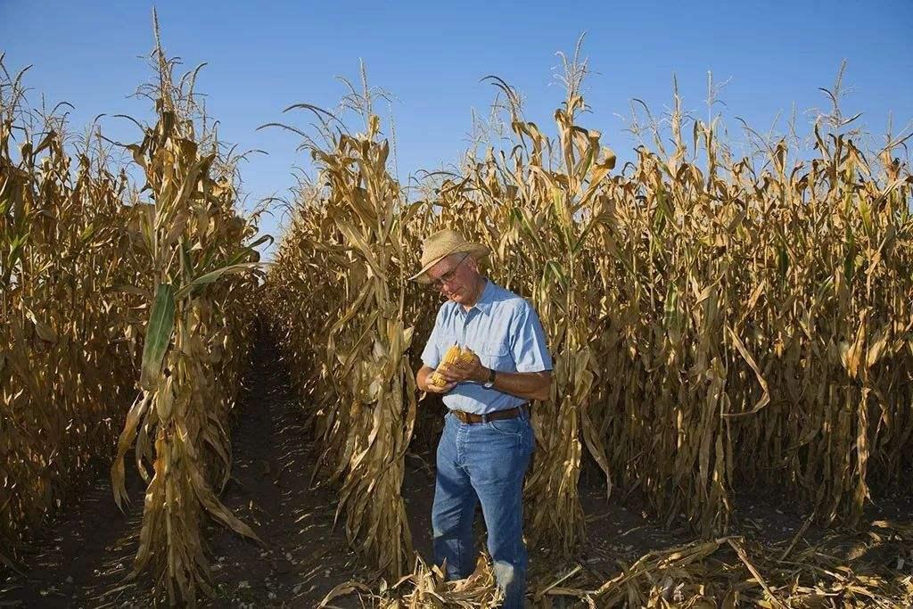 美国农业危机继续 玉米种植率创历史同期新低