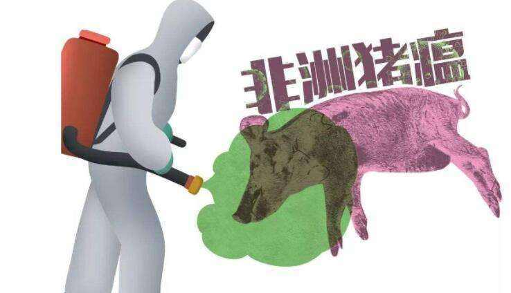 世界动物卫生组织:中国非洲猪瘟疫情将变成长期抗战