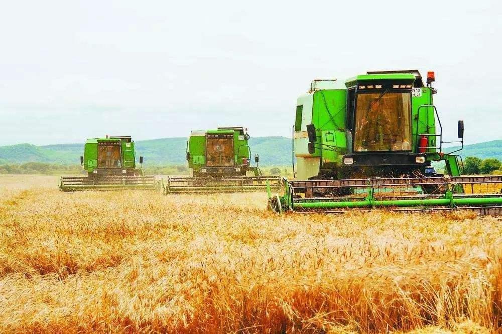 重磅!2019年中国大豆种植面积增加1000万亩