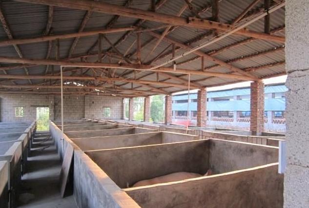 非洲猪瘟发生场复产成功案例分享与复产方案对比和建议