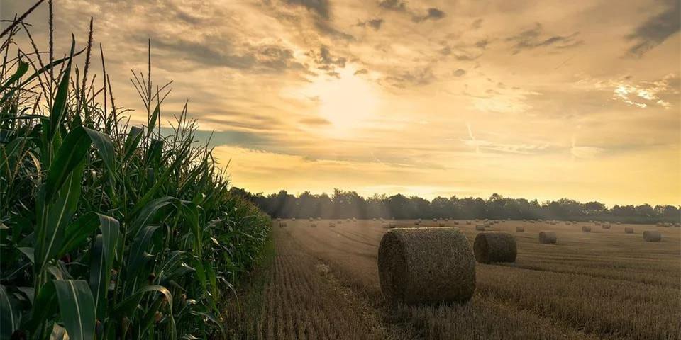 市场一片欢腾之中,玉米仍有上涨空间?