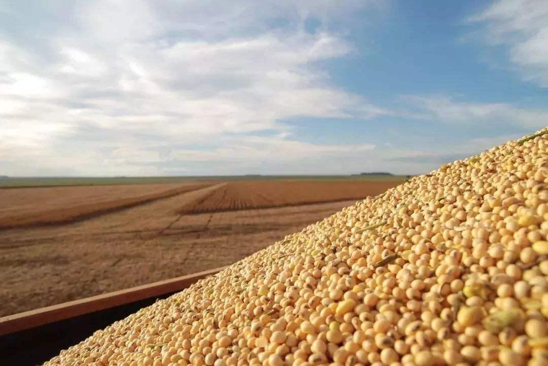 种植面积不到历史同期一半 美国大豆现货市场报价上涨
