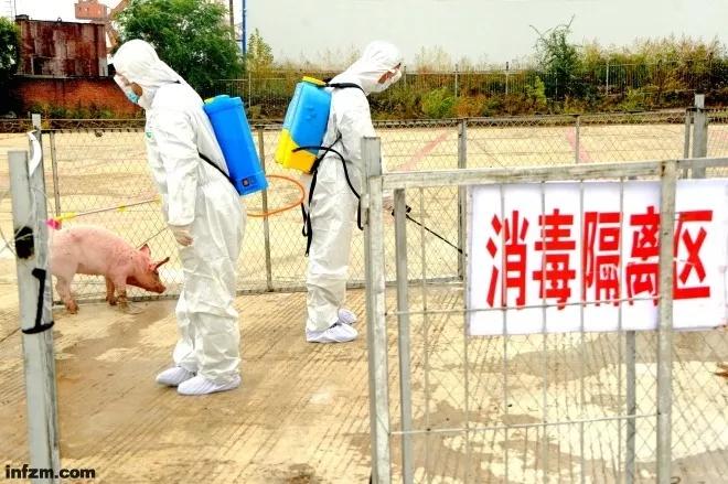 防控非洲猪瘟疫情
