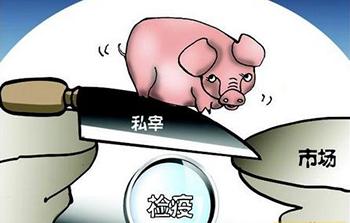 """永新向生猪屠宰乱象""""亮剑"""" 打破区域垄断现象"""