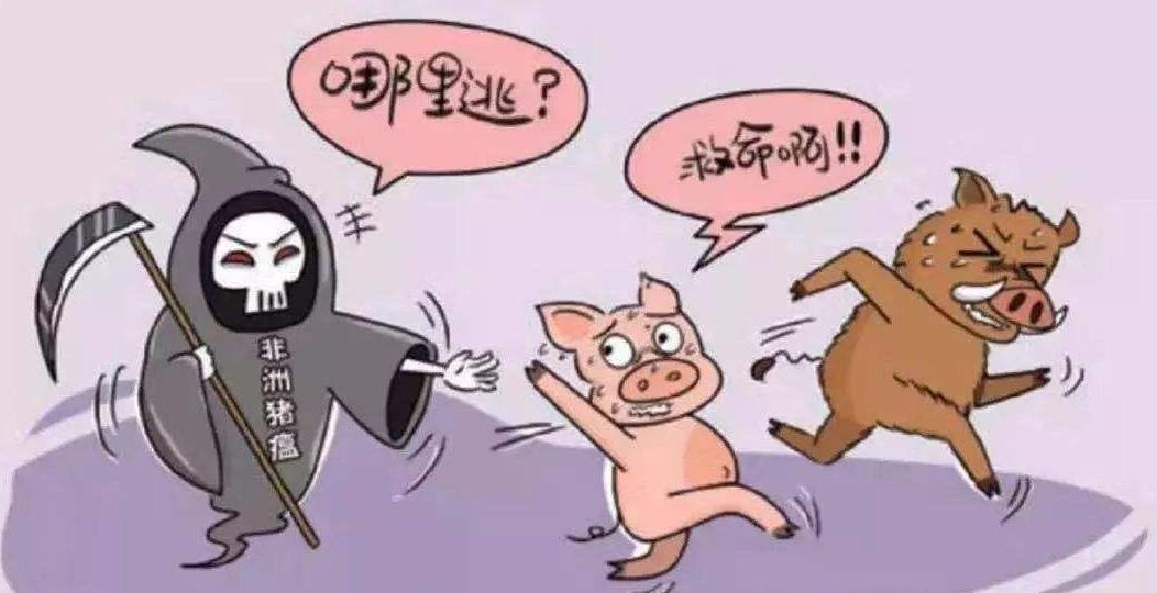 见非瘟心生发财者禽兽不如耳,比非洲猪瘟病毒更可怕的是人心
