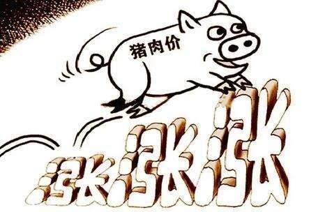 张海旺:谨防生猪价格过快上涨 对民生造成冲击