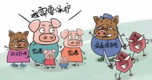 """""""非瘟""""防控做到有效消毒 才能让猪活下去"""