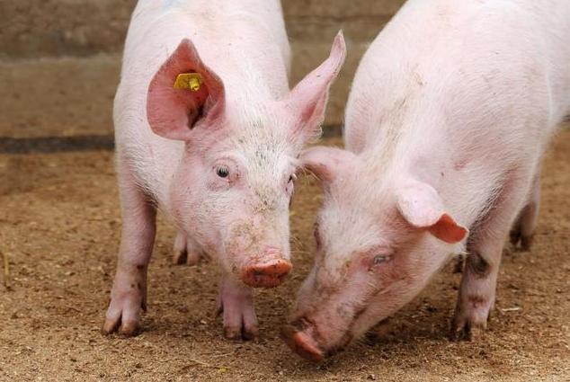 多种养殖生态在养猪过程的实际应用和技巧