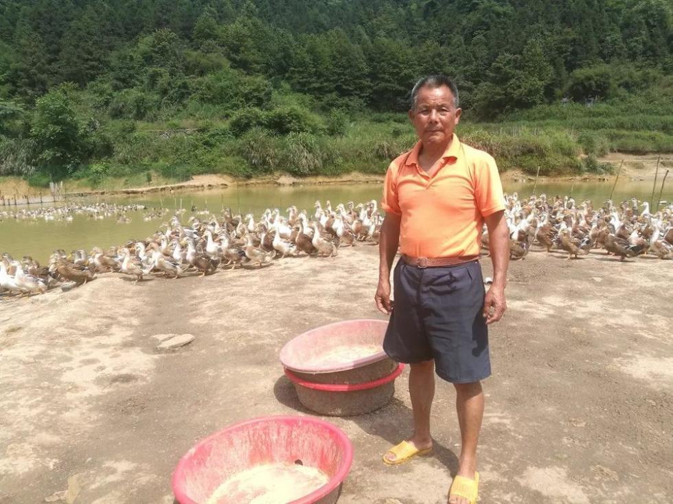 为替儿子还百万债务 怀化老父亲白天养猪晚上卖鸭已7年