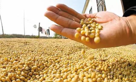 中央农办副主任:已出台政策扶持补栏增养 有能力保障猪肉、大豆等农产品供给