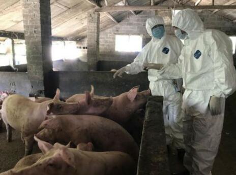 俄罗斯非洲猪瘟疫情发展和防控经验