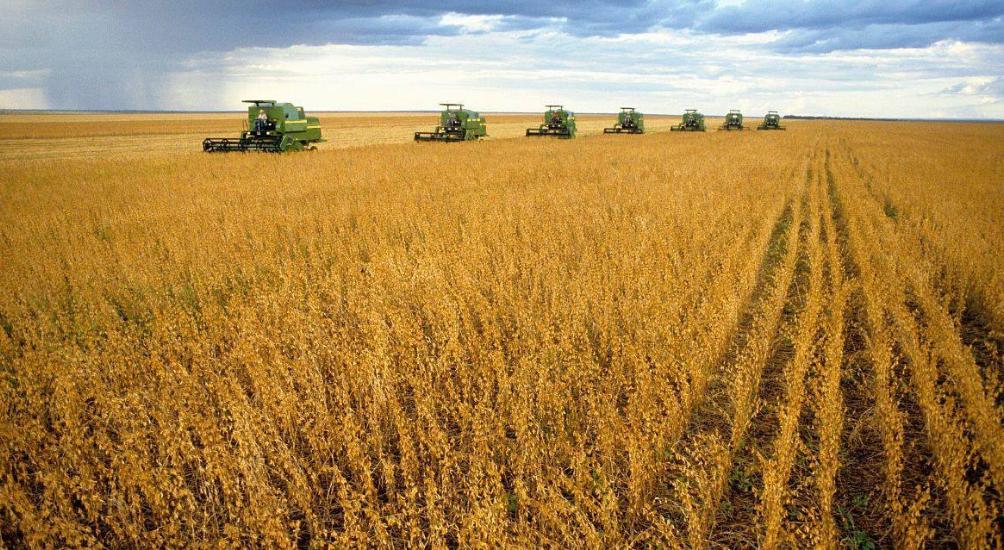 """中国大豆产量再创新高 """"卖粮难""""会再次出现吗?"""