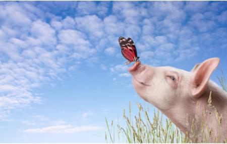 """猪价上行基础扎实 站上""""猪周期""""风口 我在哭他在笑"""