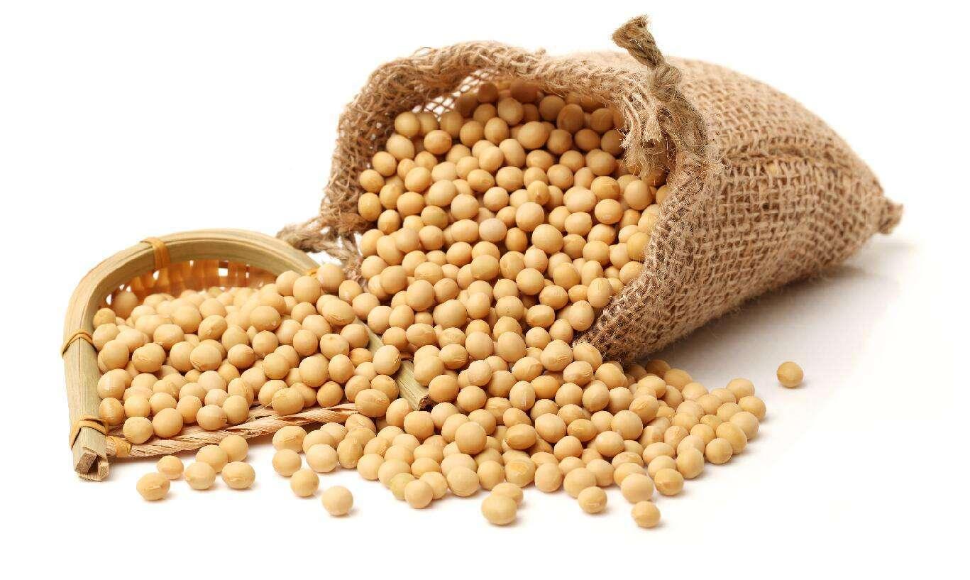 国产大豆迎来政策利好 未来一段时间内大豆价格持续上涨