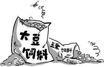 豆粕上涨为何如此疯狂?豆粕基本面情况向好
