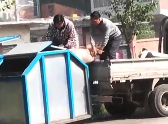 河南省一例群众视频举报丢弃死猪的案例分析,罚款1000元