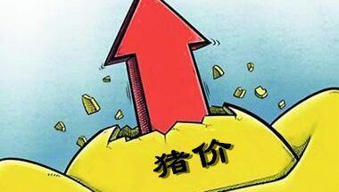 """烟台福山:生猪价格""""先抑后扬"""" 创年内新高"""